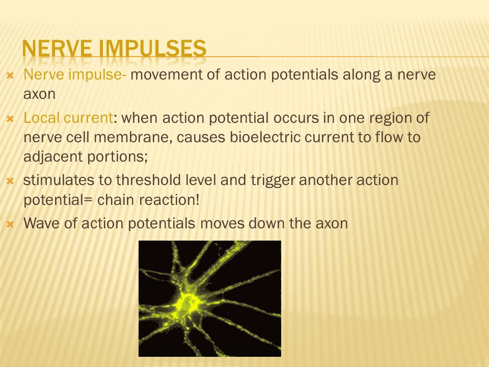 Nerve impulse- movement of action potentials along a nerve axon  Local current: when action potential occurs in one region of nerve cell membrane, causes bioelectric current to flow to adjacent portions;  stimulates to threshold level and trigger another action potential= chain reaction.