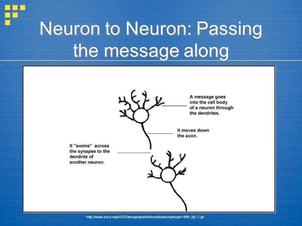 Neuron to Neuron: Passing the message along