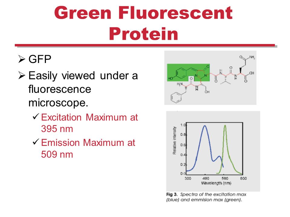 Plant and Mammalian Tissue Culture Fluorescence Microscope
