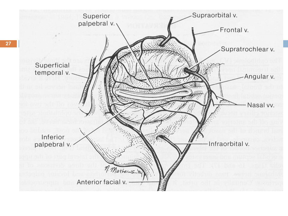 Review Of Clinical Anatomy And Physiology Of The Conjunctiva Ayesha