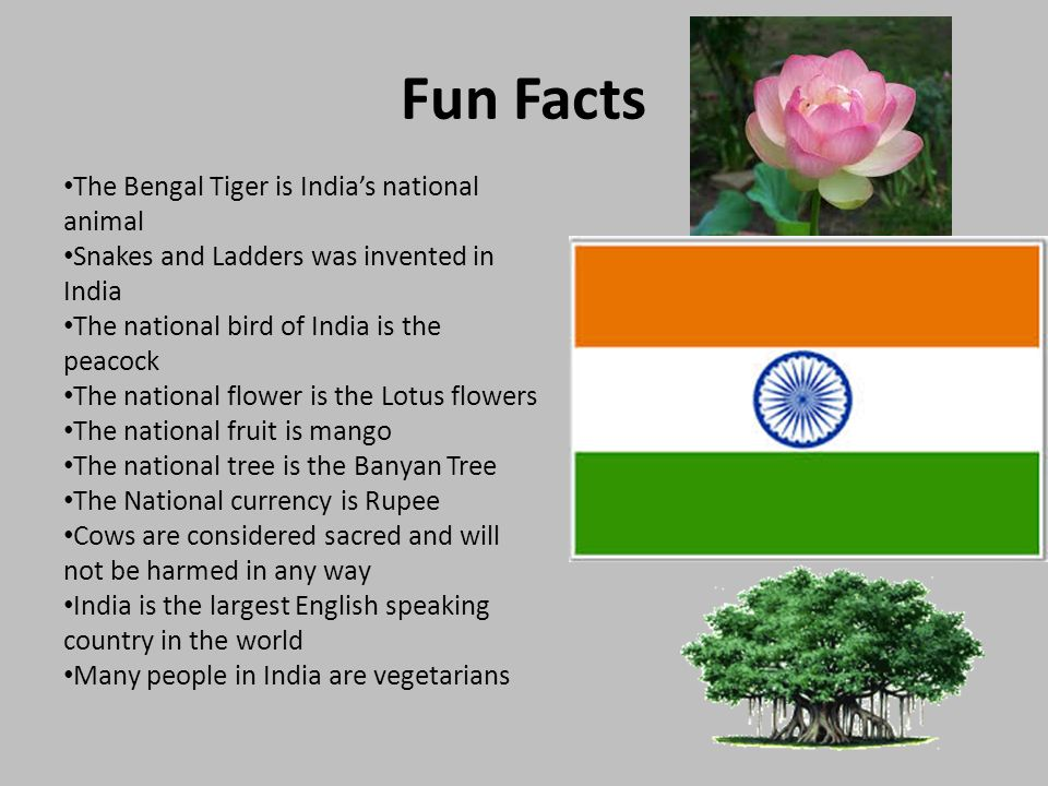 India by gracie roberts intro to india mwatchfeatureplayer 4 fun facts mightylinksfo