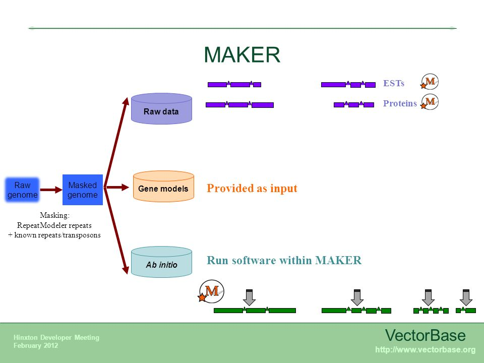 Maker annotation process example of glossina vectorbase karyn mgy 12 vectorbase ccuart Images