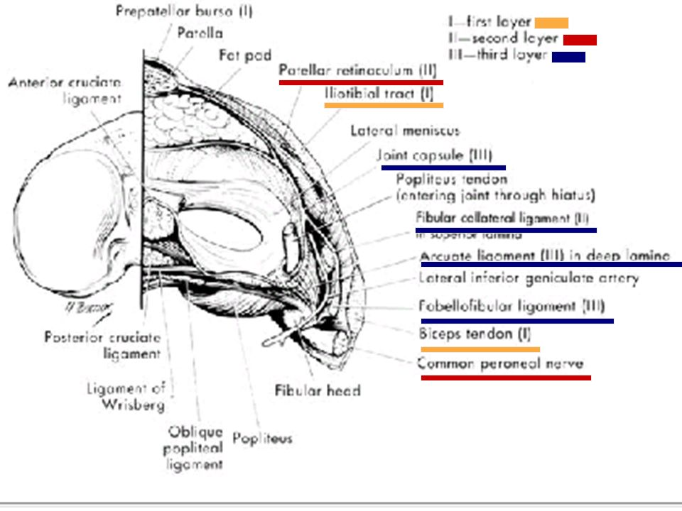 Posterolateral Rotatory Instability of the Knee Steven A. Seeker ...