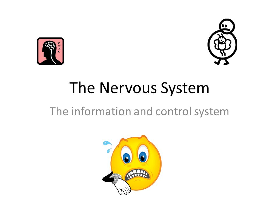 The Nervous System The information and control system