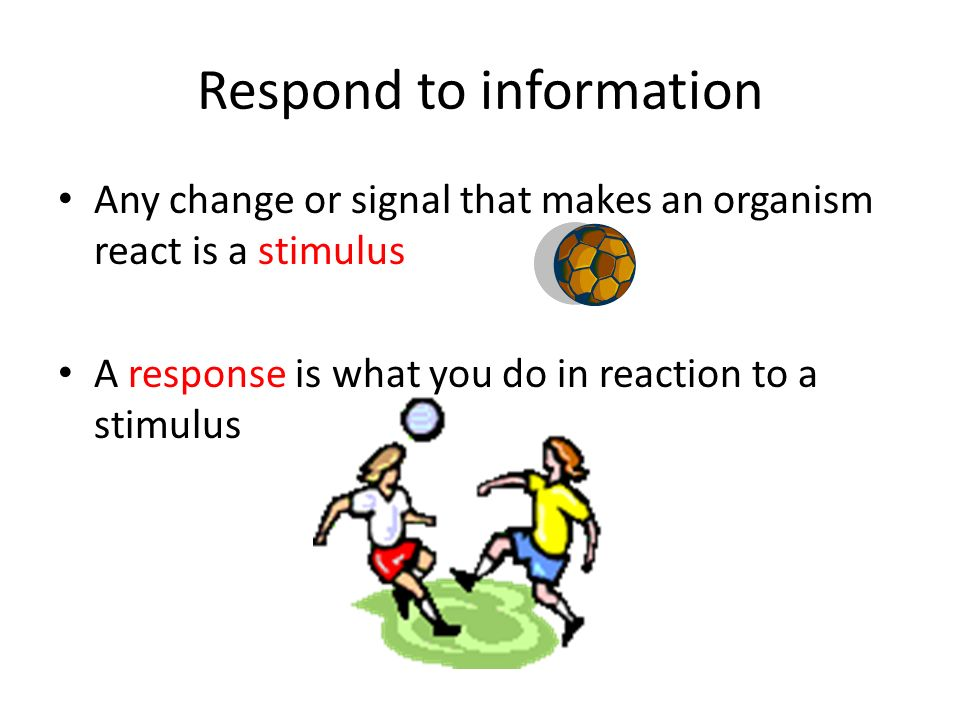 Respond to information Any change or signal that makes an organism react is a stimulus A response is what you do in reaction to a stimulus