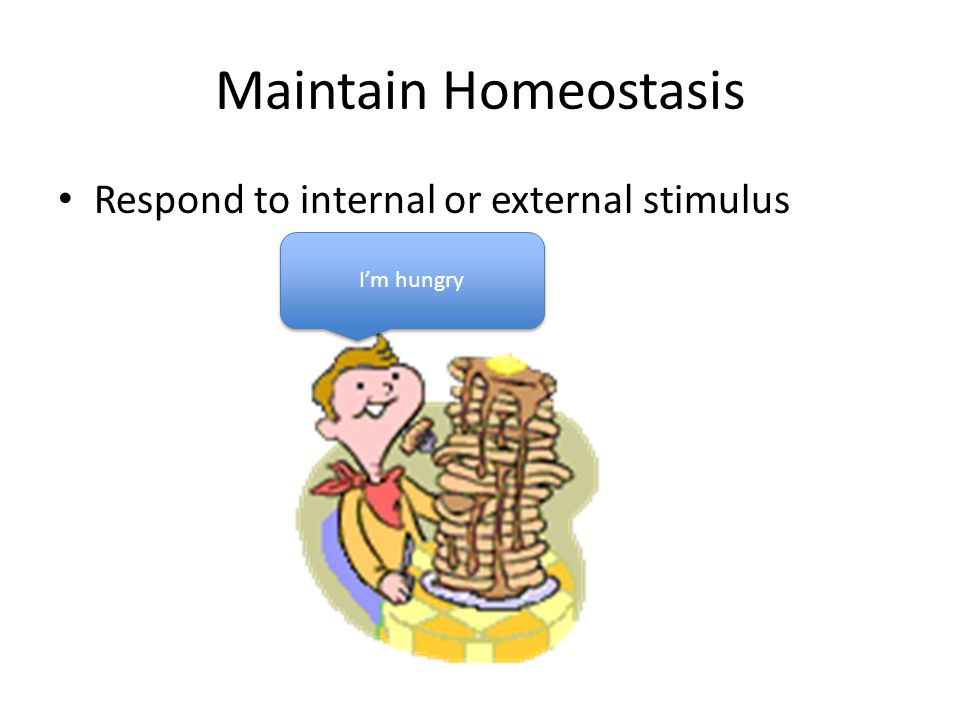 Maintain Homeostasis Respond to internal or external stimulus I'm hungry
