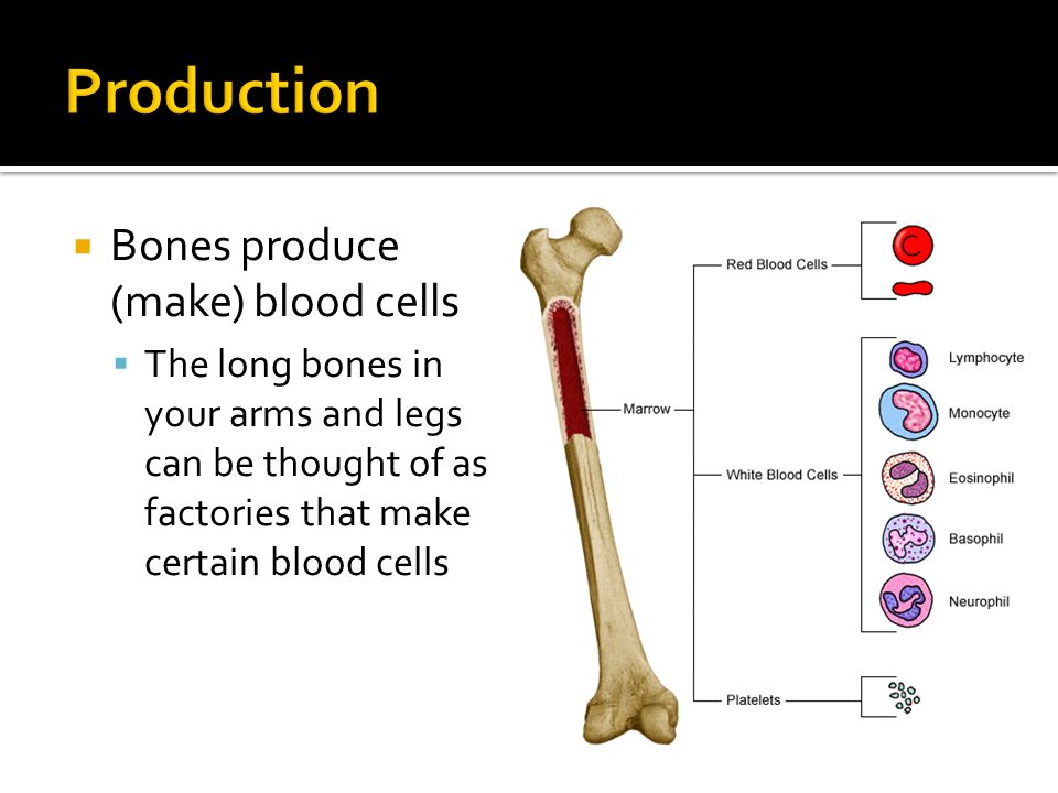 Human Body Systems Unit 1 What Is The Job Of The Framewalls Of A