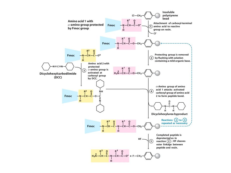 Chemical Synthesis of Peptides Peptides, proteins, pseudopeptides