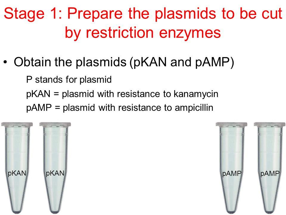 pkan plasmid