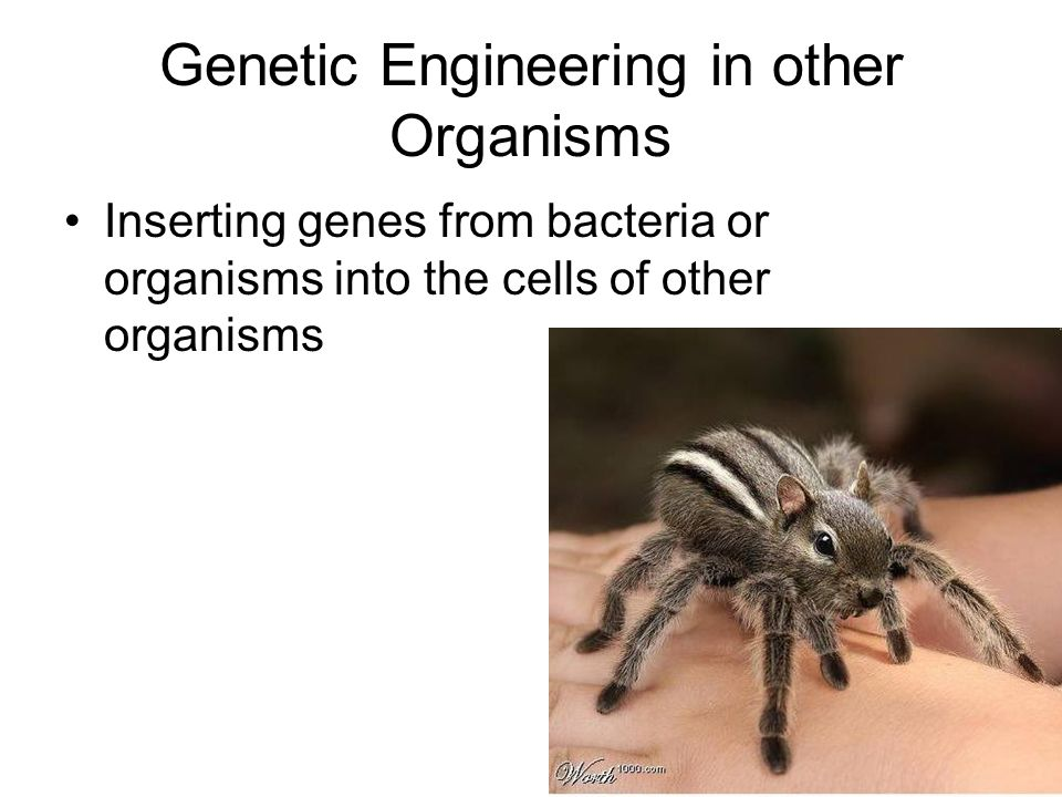 Genetic Engineering in other Organisms Inserting genes from bacteria or organisms into the cells of other organisms