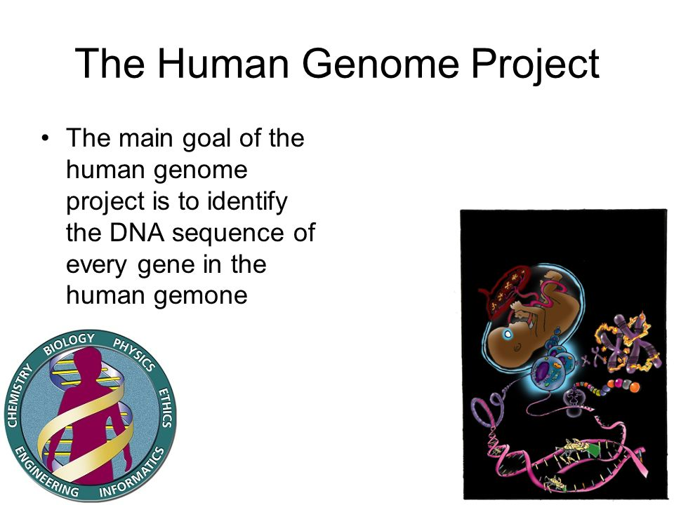 The Human Genome Project The main goal of the human genome project is to identify the DNA sequence of every gene in the human gemone