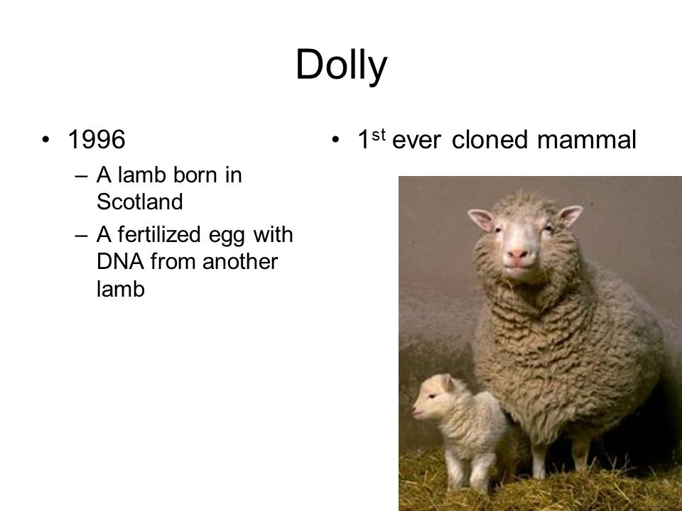 Dolly 1996 –A lamb born in Scotland –A fertilized egg with DNA from another lamb 1 st ever cloned mammal