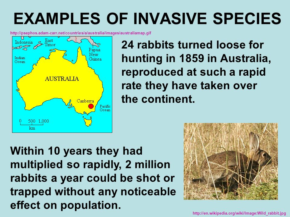 Human Impact On The Biosphere Chapter 6 3 Biodiversity Ppt Download
