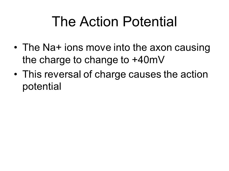 An Action Potential An Action Potential is produced due to a sudden increase in the permeability of the membrane to Na + : Na + ions rush into neuron through the Na+ channels to depolarize the membrane, and then further increases its permeability to Na + This leads to greater influx & further depolarization --- positive feedback