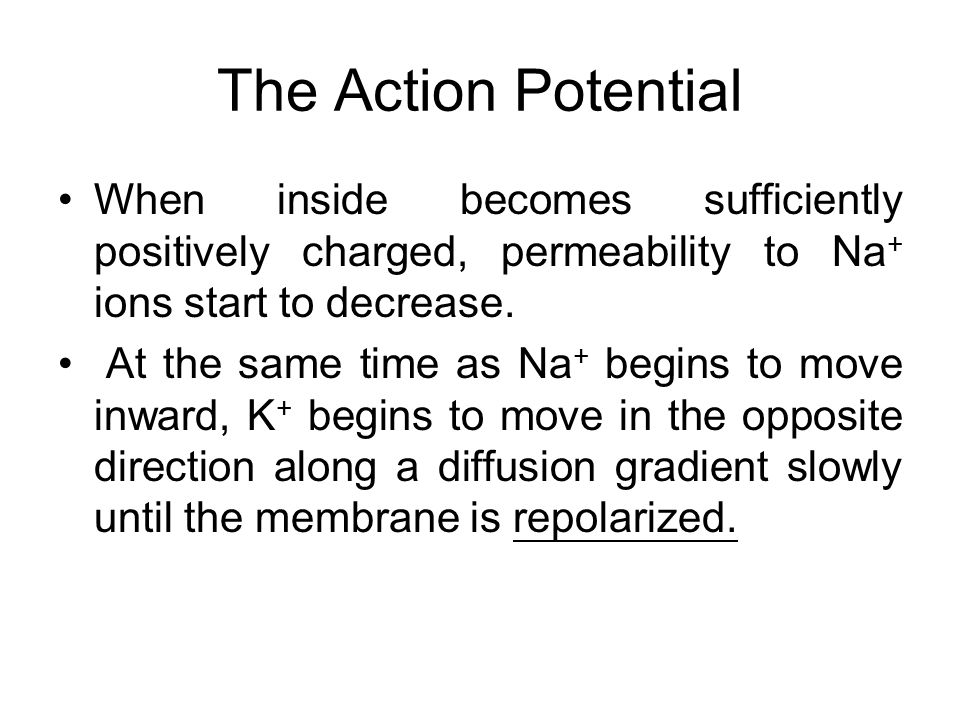 The Action Potential The Na+ ions move into the axon causing the charge to change to +40mV This reversal of charge causes the action potential