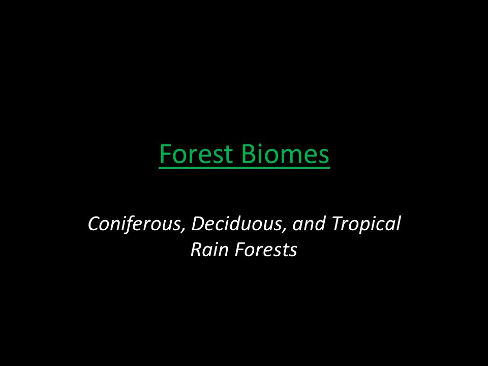 Forest Biomes Coniferous, Deciduous, and Tropical Rain Forests