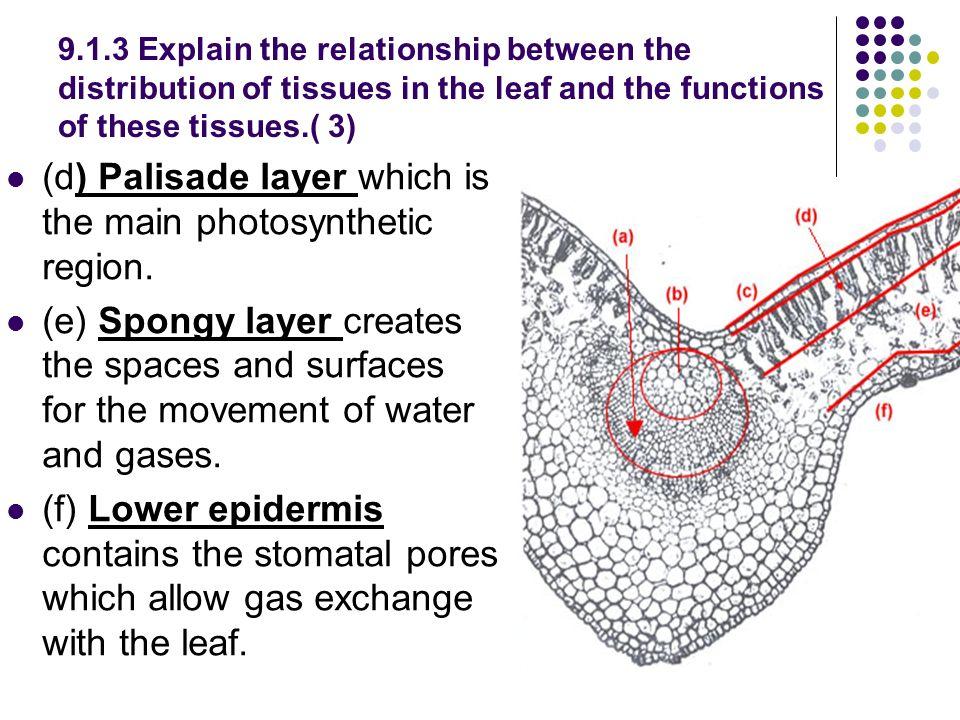 labelled diagram of pumpkin leaf wod wiring diagram Diagram of Black 9 1 leaves ib assessment statement draw and label diagrams to show diagram of toxic labelled diagram of pumpkin leaf