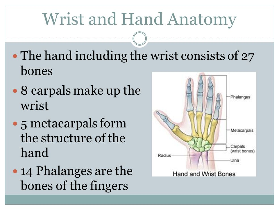 Common Injuries Of The Wrist And Hand Wrist And Hand Anatomy The