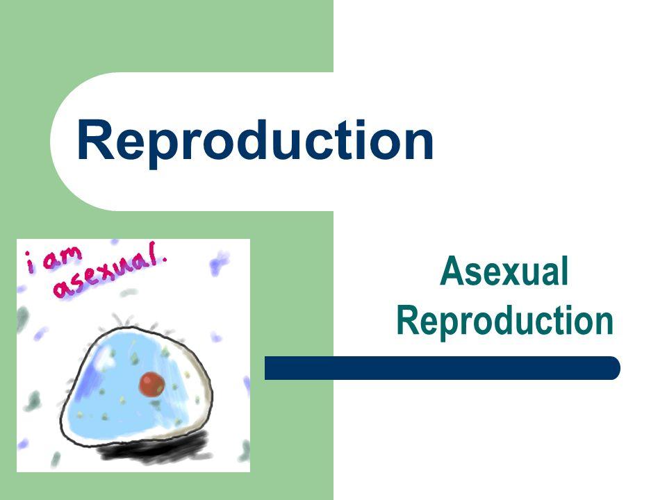 Obelia asexual reproduction advantages