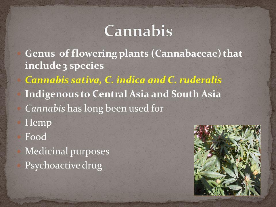 Genus of flowering plants (Cannabaceae) that include 3