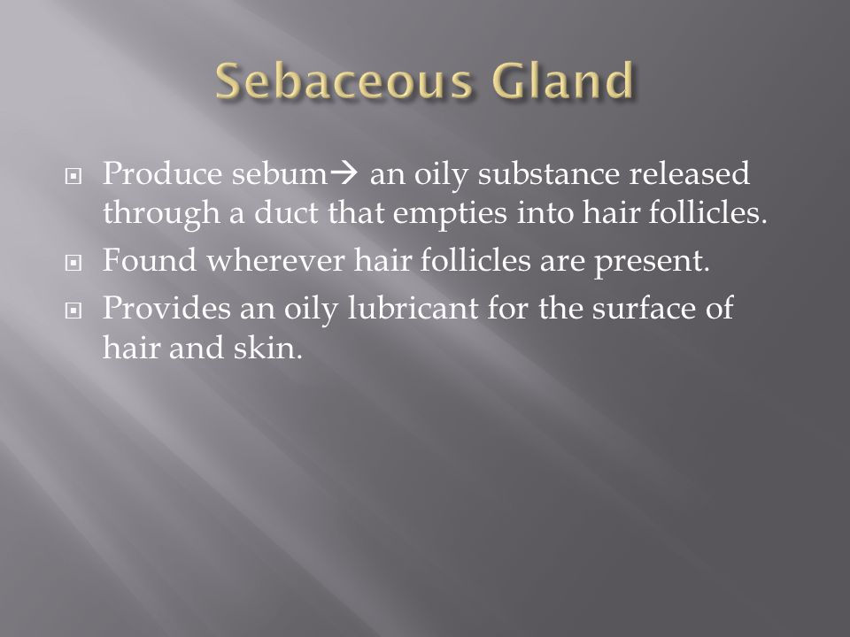  Produce sebum  an oily substance released through a duct that empties into hair follicles.