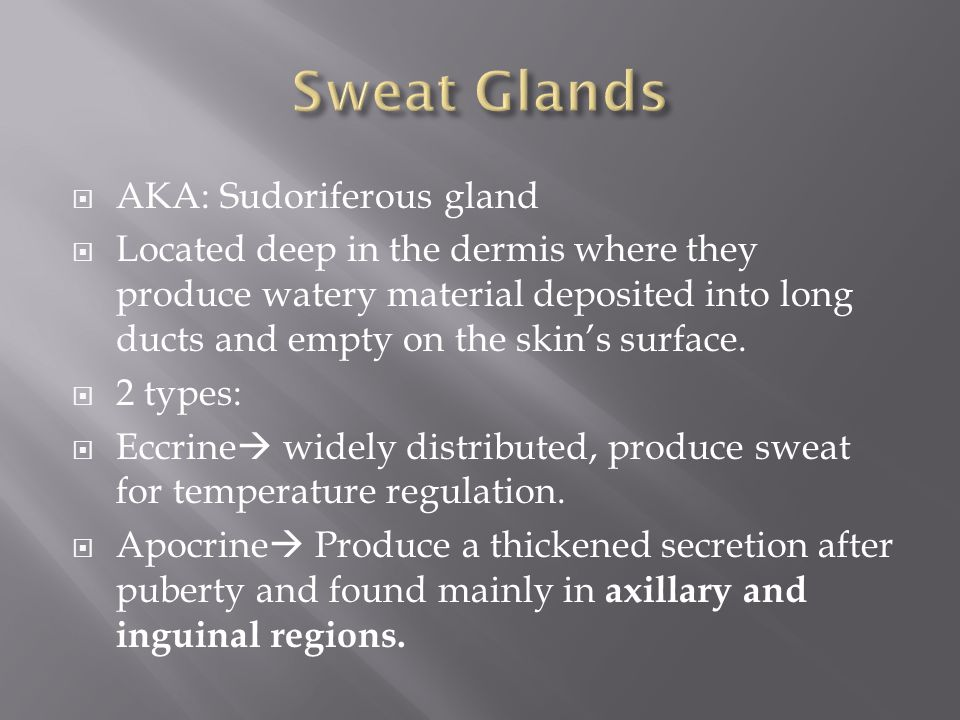  AKA: Sudoriferous gland  Located deep in the dermis where they produce watery material deposited into long ducts and empty on the skin's surface.