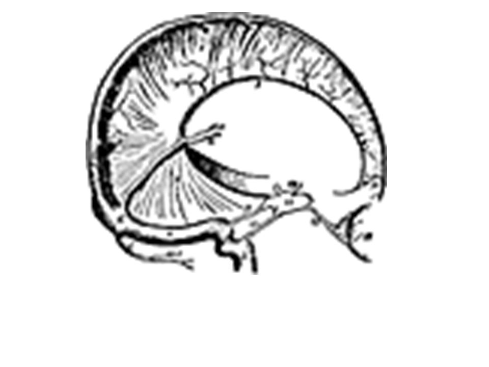 Meninges Dural Venous Sinuses