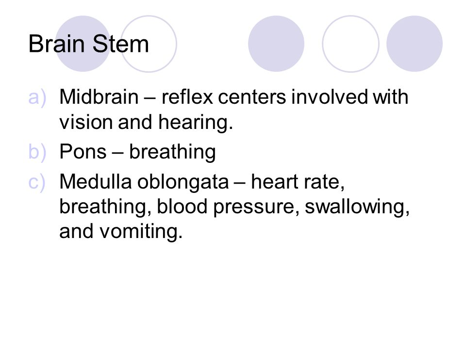 Brain Stem a)Midbrain – reflex centers involved with vision and hearing.