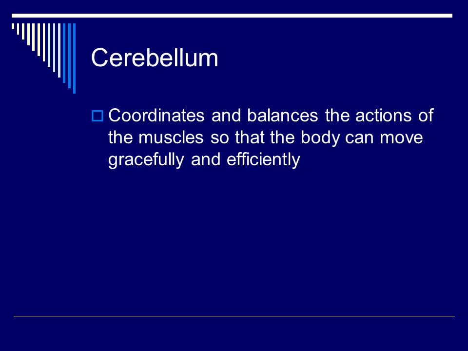 Cerebellum  Coordinates and balances the actions of the muscles so that the body can move gracefully and efficiently