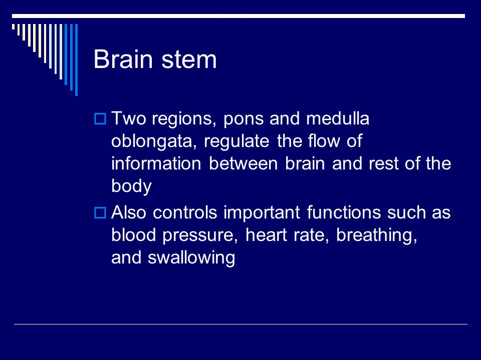 Brain stem  Two regions, pons and medulla oblongata, regulate the flow of information between brain and rest of the body  Also controls important functions such as blood pressure, heart rate, breathing, and swallowing