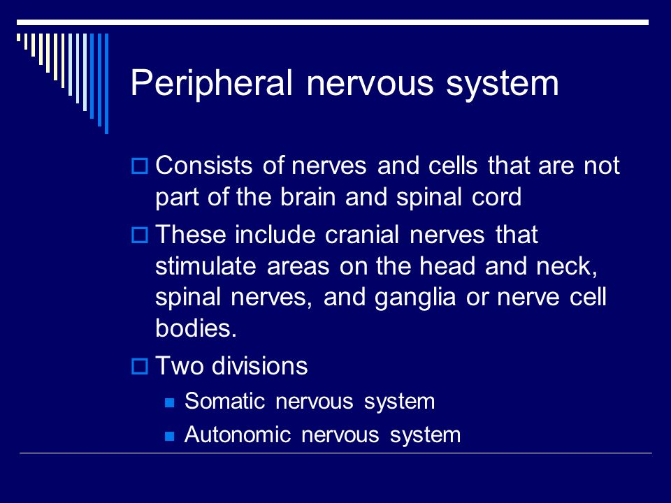 Peripheral nervous system  Consists of nerves and cells that are not part of the brain and spinal cord  These include cranial nerves that stimulate areas on the head and neck, spinal nerves, and ganglia or nerve cell bodies.