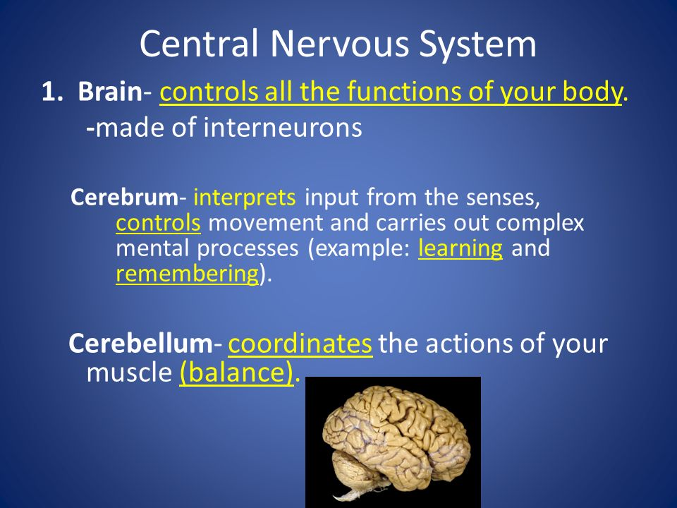 Structure of the Nervous System Nervous system can be broken down into two parts, the and the nervous system.