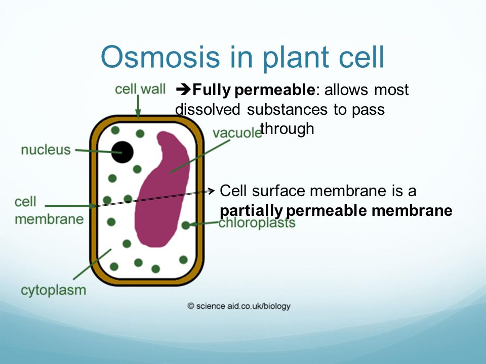 partially permeable membrane