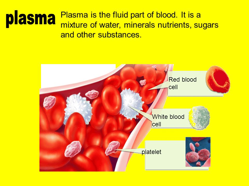 platelet White blood cell Red blood cell Plasma is the fluid part of blood.