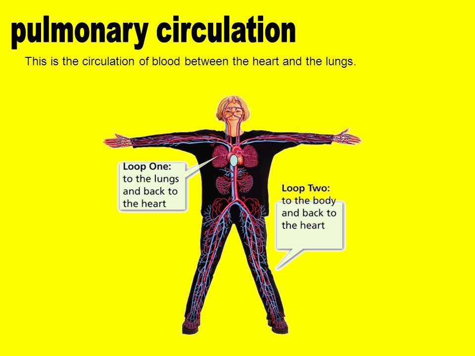 This is the circulation of blood between the heart and the lungs.