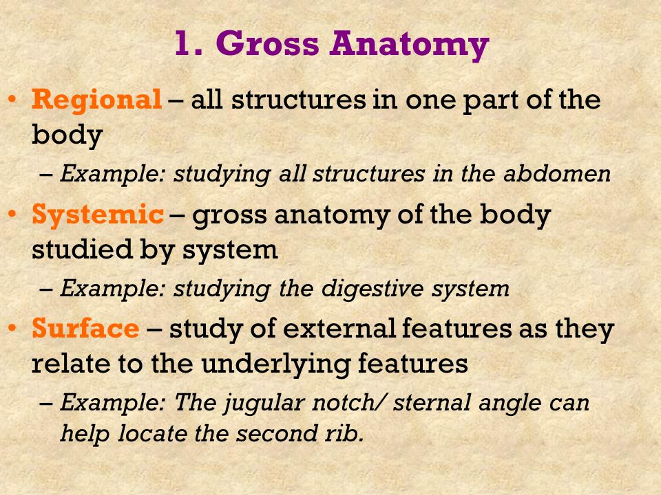 Chapter 1 The Human Body: Anatomical Regions, Directions, and Body ...