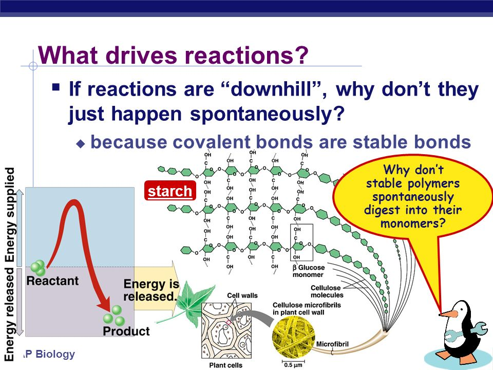 AP Biology Energy & life  Organisms require energy to live  where does that energy come from.
