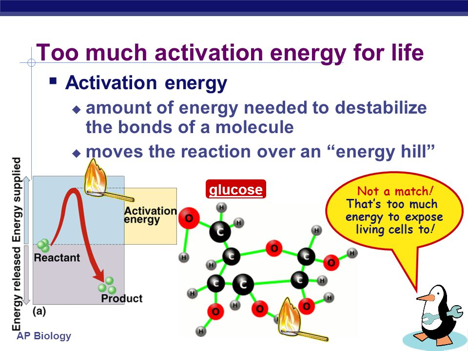 AP Biology Activation energy  Breaking down large molecules requires an initial input of energy  activation energy  large biomolecules are stable  must absorb energy to break bonds energy cellulose CO 2 + H 2 O + heat