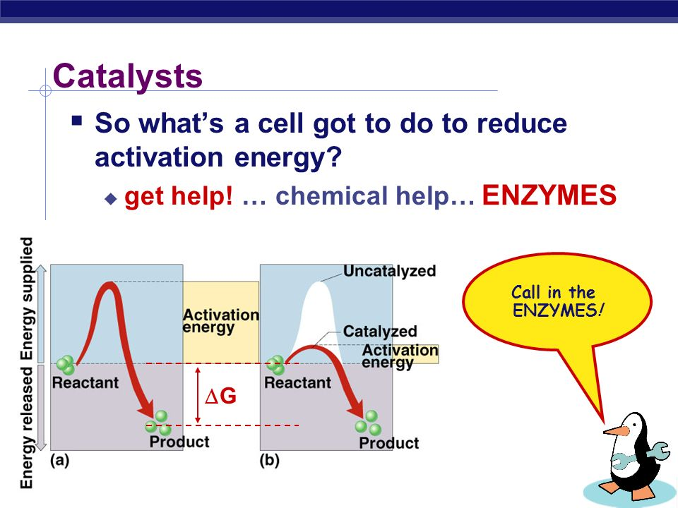 AP Biology Reducing Activation energy  Catalysts  reducing the amount of energy to start a reaction Pheeew… that takes a lot less energy.