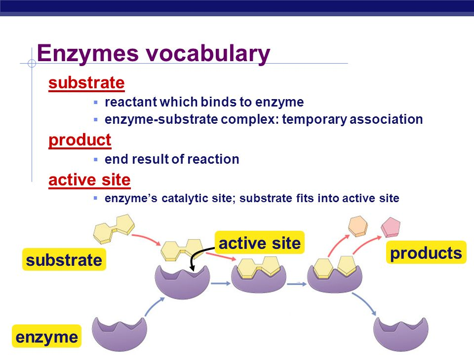 AP Biology Enzymes  Biological catalysts  proteins (& RNA)  facilitate chemical reactions  increase rate of reaction without being consumed  reduce activation energy  don't change free energy (  G) released or required  required for most biological reactions  highly specific  thousands of different enzymes in cells  control reactions of life