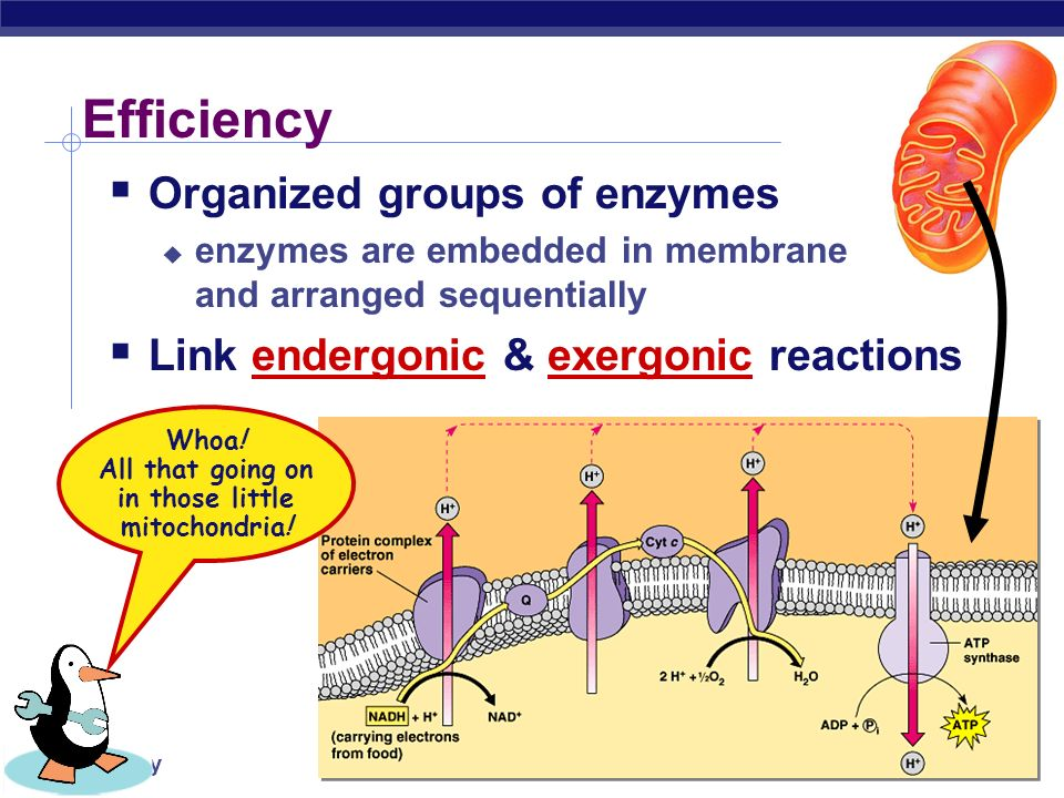 AP Biology Metabolic pathways A  B  C  D  E  F  GA  B  C  D  E  F  G enzyme 1  enzyme 2  enzyme 3  enzyme 4  enzyme 5  enzyme 6   Chemical reactions of life are organized in pathways  divide chemical reaction into many small steps  artifact of evolution   efficiency  intermediate branching points   control = regulation A  B  C  D  E  F  GA  B  C  D  E  F  G enzyme 