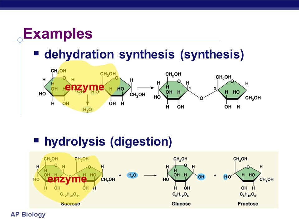 AP Biology Examples  dehydration synthesis (synthesis)  hydrolysis (digestion) + H2OH2O + H2OH2O enzyme
