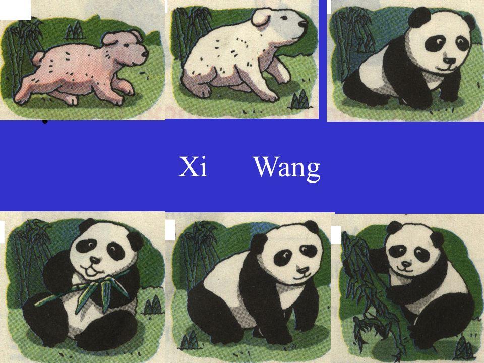 评讲午间翻译  Xi Wang Looks Baby pandas Giant pandas They