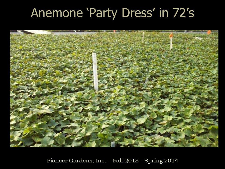 Heuchera \'Beaujolais\' in 72\'s Pioneer Gardens, Inc. – Fall Spring ...