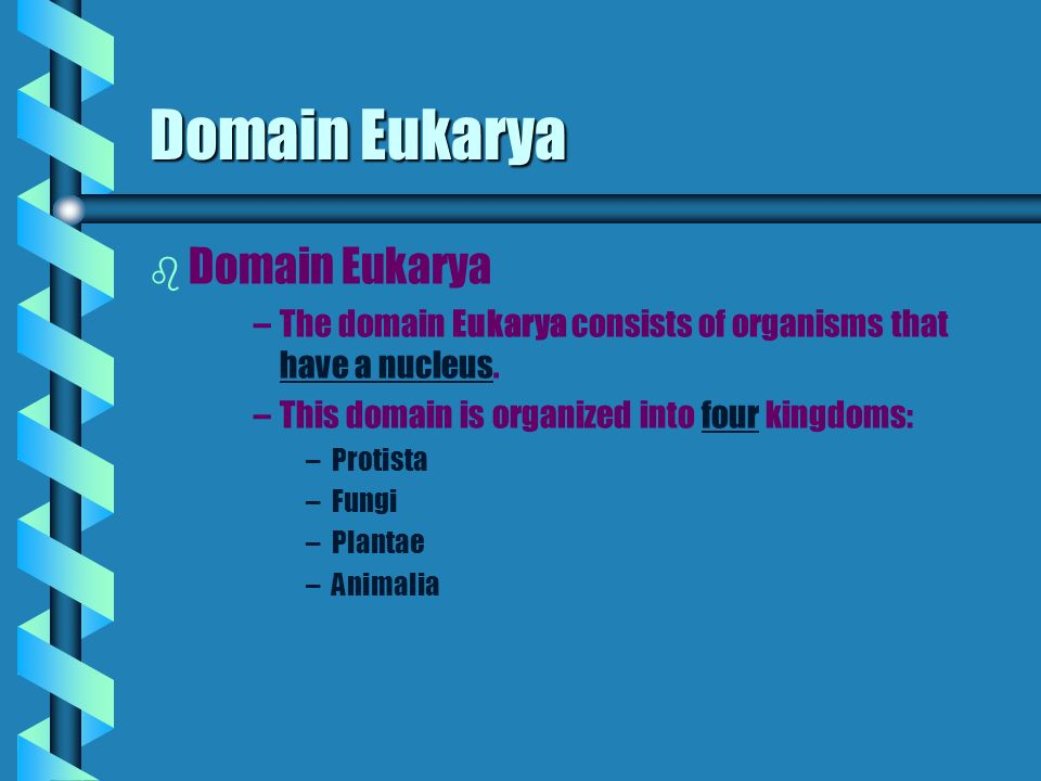Domain Eukarya b b Domain Eukarya – –The domain Eukarya consists of organisms that have a nucleus.