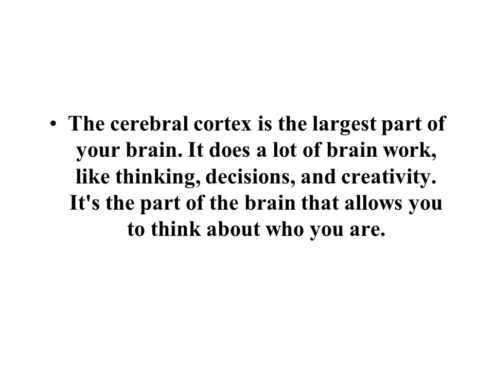 The cerebral cortex is the largest part of your brain.