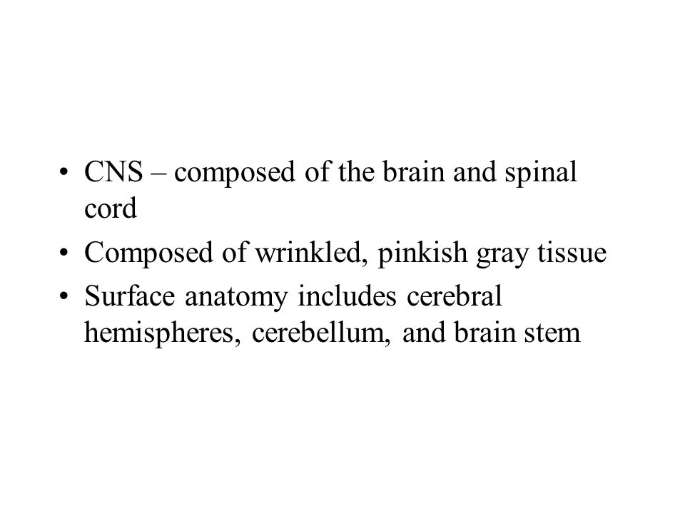 CNS – composed of the brain and spinal cord Composed of wrinkled, pinkish gray tissue Surface anatomy includes cerebral hemispheres, cerebellum, and brain stem