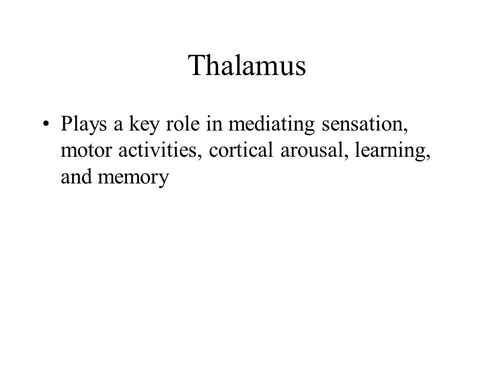 Thalamus Plays a key role in mediating sensation, motor activities, cortical arousal, learning, and memory
