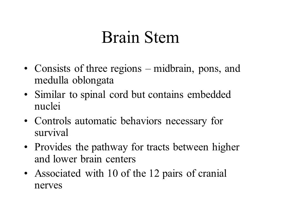 Brain Stem Consists of three regions – midbrain, pons, and medulla oblongata Similar to spinal cord but contains embedded nuclei Controls automatic behaviors necessary for survival Provides the pathway for tracts between higher and lower brain centers Associated with 10 of the 12 pairs of cranial nerves