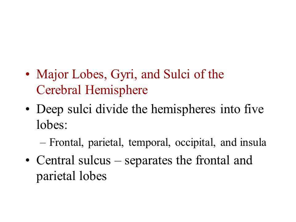 Major Lobes, Gyri, and Sulci of the Cerebral Hemisphere Deep sulci divide the hemispheres into five lobes: –Frontal, parietal, temporal, occipital, and insula Central sulcus – separates the frontal and parietal lobes